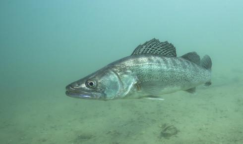 Quiz: Hva slags fisk er dette?