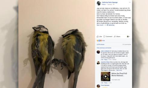 Nei, det er ikke sikkert at småfugler dør av skrekk som følge av fyrverkeri