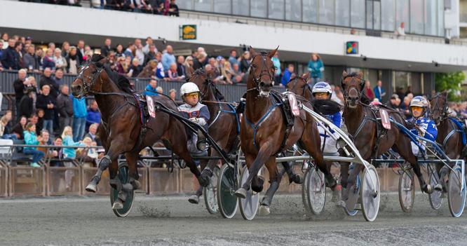 Du trenger ikke peiling for å spille på hest (foto: Eirik Stenhaug).