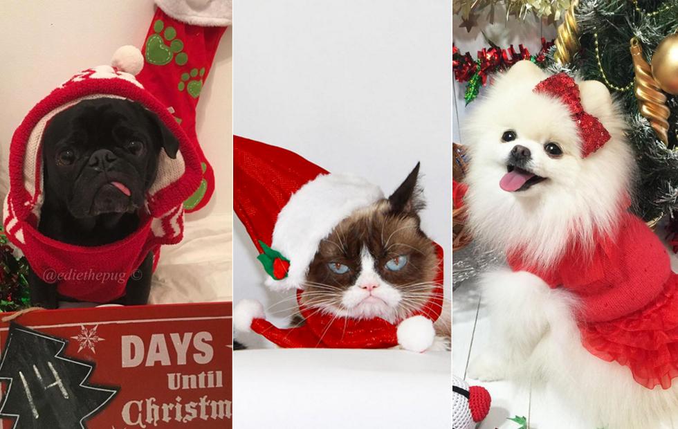 11 Hunder Og Katter Som Er Klare For Juleferie