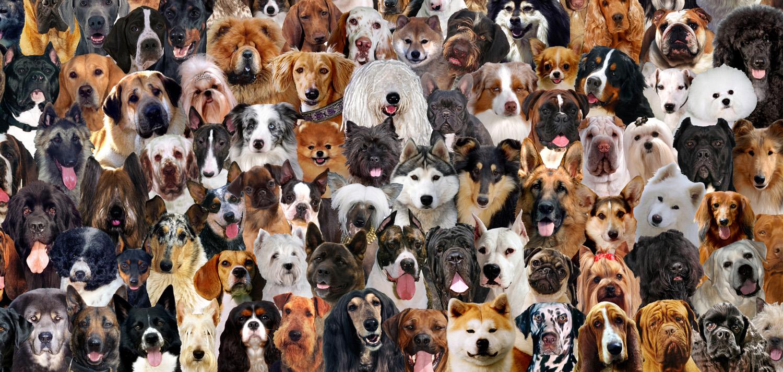 Много собачек картинки