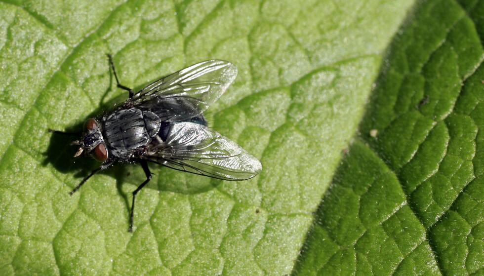 Alle insektene i Norge skal telles