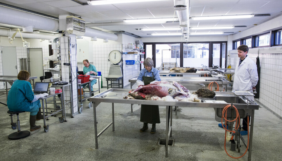 VARSLET: Det er 337 ansatte ved Veterinærinstituttet i dag.Foto: Tore Meek / NTB scanpix.
