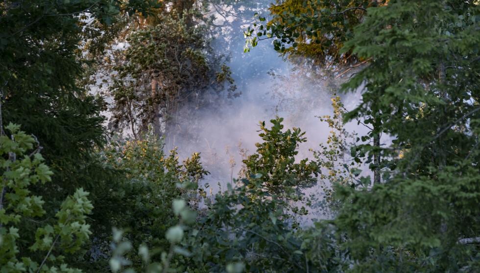 Faren for skogbrann øker over hele landet. Foto: Tor Erik Schrøder / NTB scanpix