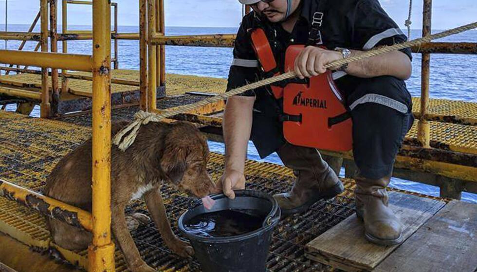 Hunden ble tatt hånd om av de ansatte på oljeriggen. Hunden ble oppdaget mens den svømte i retning oljeplattformen. Foto: Vitisak Payalaw via AP / NTB scanpix