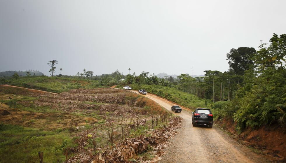 Et avskoget område på Sumatra i Indonesia som statsminister Erna Solberg (H) besøkte i 2015. Foto: Heiko Junge / NTB scanpix