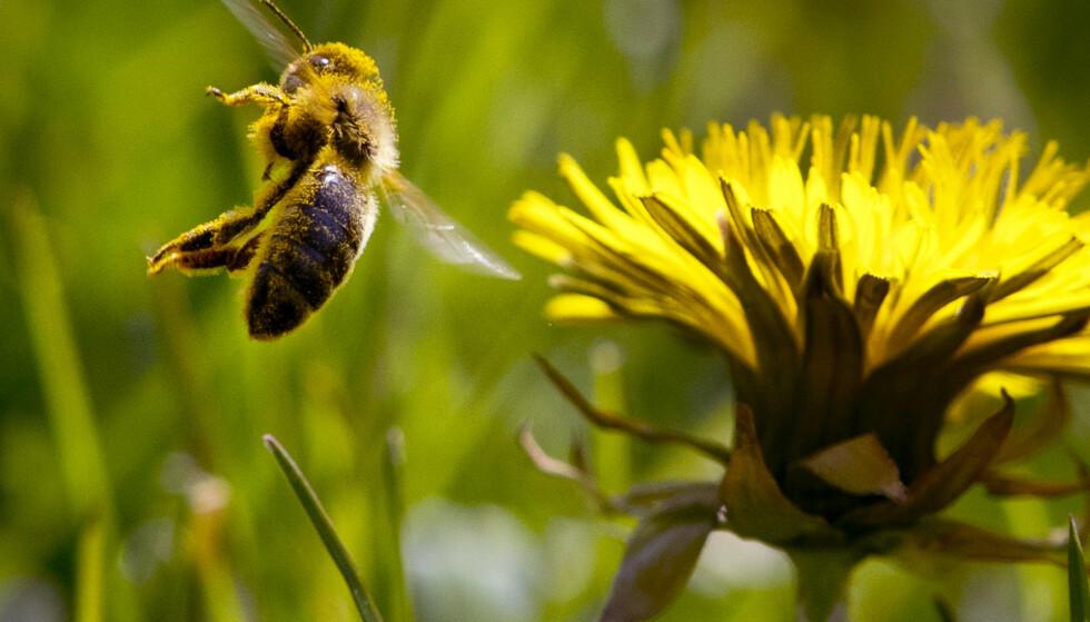 Svært mange insekter og andre arter er truet av utryddelse. En omfattende rapport om tap av arter og andre miljøproblemer fullføres i Paris denne uka. Rapporten skal offentliggjøres 6. mai. Illustrasjonsfoto: Michael Probst / AP / NTB scanpix
