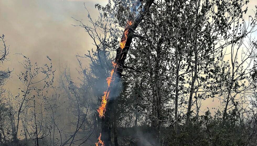 På kvelden 17. mai brøt det ut skogbrann på Nøtterøy i Færder kommune. Ved 19-tiden hadde brannvesenet kontroll på stedet. Foto: Vestfold Interkommunale Brannvesen / NTB scanpix