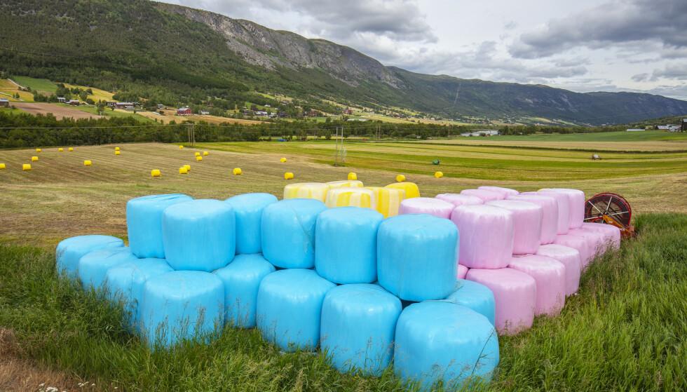 De siste tre årene har salg av blå, rosa og gul rundballeplast gitt penger til kreftsaken. Men nå er det slutt på fargerike rundballer. (Foto: Halvard Alvik, NTB scanpix Credit: NTB scanpix)