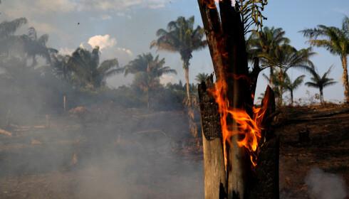 Brann i jungelen i Amazonas i Brasil.