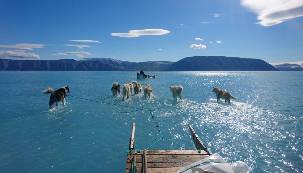 Hunder drar en slede over vanndekt is nære Qaanaaq, Greenland den 13. juni i år. Problemet er at dette skjer med jevne mellomrom og spesielt når isen er tykk. Foto: Danish Meteorological Institute/Steffen Olsen via REUTERS