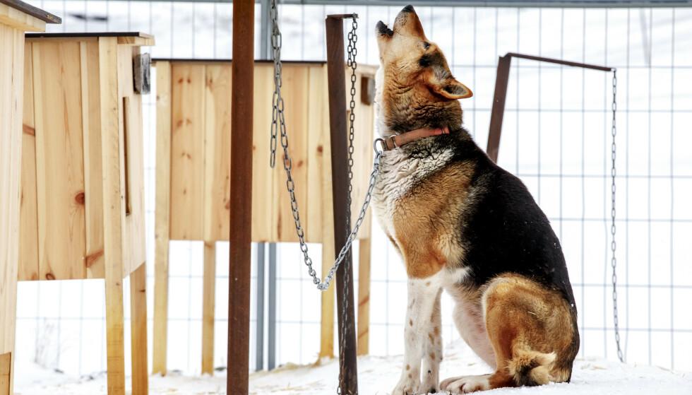 Veterinærforeningen anbefaler hundeeiere å holde seg oppdaterte på relevante nettsider, i stedet for å tro på råd og teorier på sosiale medier. Foto: Heiko Junge / NTB scanpix