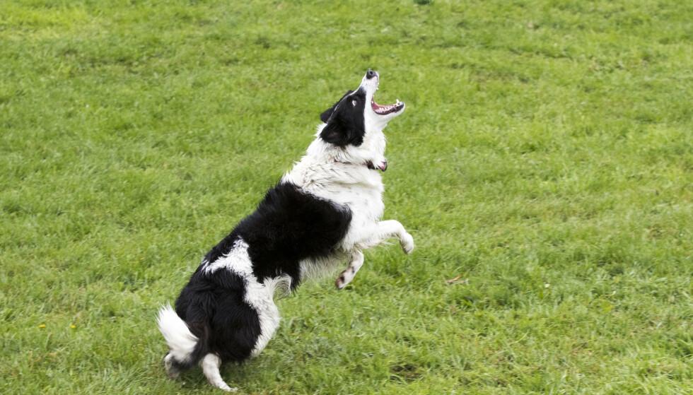 Flere hunder har dødd etter kraftig diaré og oppkast de siste dagene. Foto: Terje Pedersen / NTB scanpix