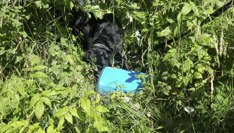 Narkotikaen ble funnet i en skoeske. Foto: Tolletaten / NTB scanpix