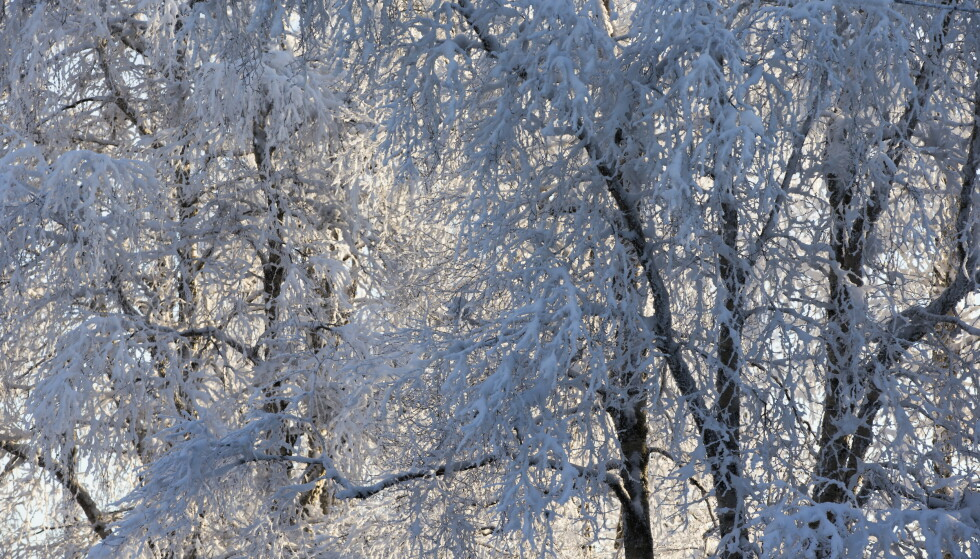 I Tromsø settes det snørekord, men snø blir det ellers lite av i store deler av landet. I grensetraktene øst for Lillehammer er det imidlertid ventet noe snø denne uken. Foto: Berit Roald / NTB scanpix
