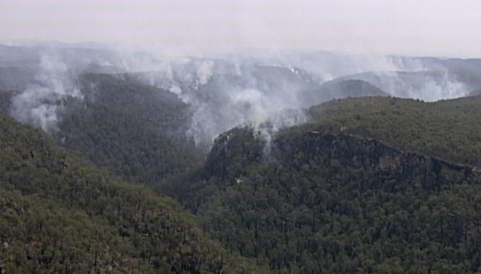Brannmannskaper i Australia har reddet verdens siste ville bestand av Wollemi-furutre, en forhistorisk tresort kjent som dinosaurtrær, fra de voldsomme brannene. Her ses røyk fra brannen i Blue Mountains i New South Wales i Australia. Foto: ABC via AP / NTB scanpix.