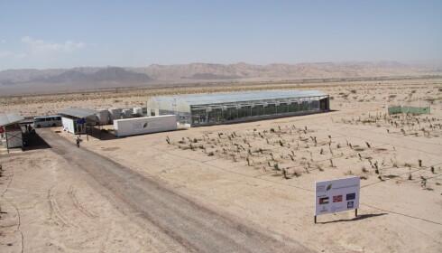 Fra sommeren av skal Bama selge cherrytomater og søtpoteter som Sahara Forest Project har dyrket ved dette anlegget i Jordan. Foto: The Sahara Forest Project / NTB scanpix