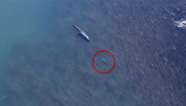 Image: Haien oppdager monsterkrokodillen - så skjer dette