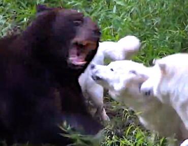 Image: Bjørnen ser ikke hva som kommer