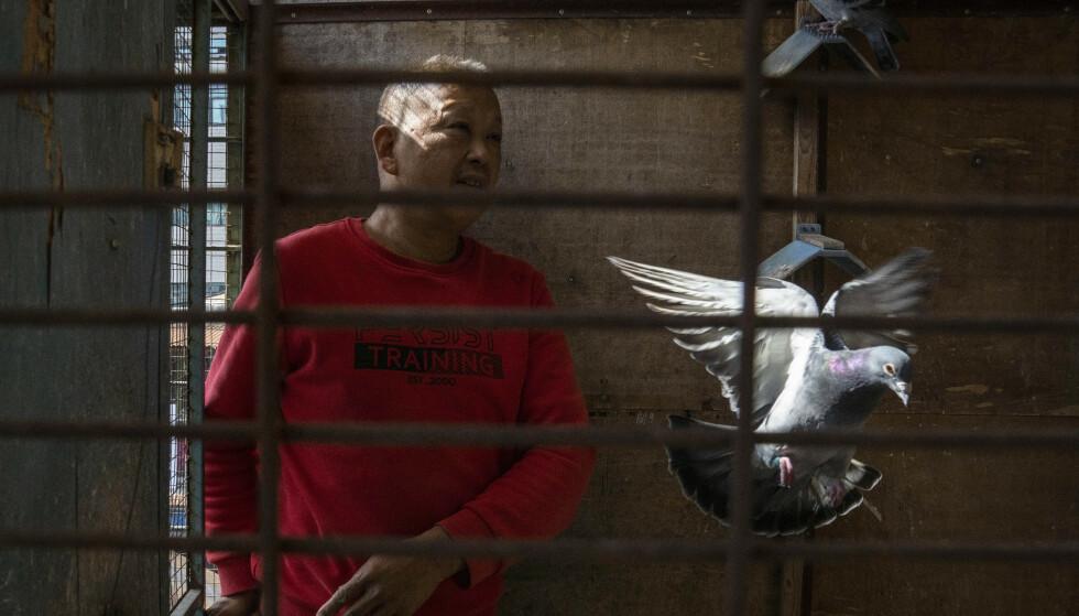 En selger ved Huanan-markedet i Wuhan, der koronaviruset antas å først ha smittet fra menneske til dyr, steller duene han har hjemme. Bildet er fra oktober. WWF Verdens naturfond advarer om at sykdommer kan smitte fra dyr og til mennesker på dyremarkeder. Foto: Ng Han Guan / AP / NTB
