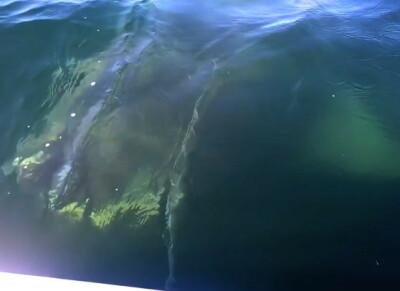 Image: Kjempehaien går viralt: - Herregud!