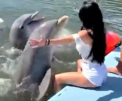 Image: Plutselig gjør delfinen dette
