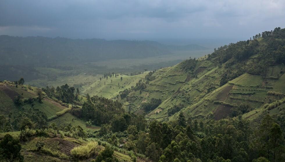 Virunga nasjonalpark. (Foto: AFP/NTB)