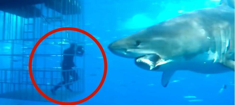 Haien blåser i buret