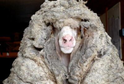 Image: Fjernet ulla - bak skjuler dette seg