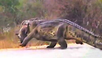 Image: Plutselig ser de hva den spiser