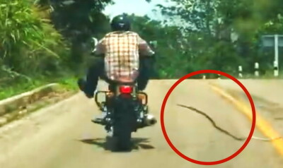 Image: Plutselig gjør slangen dette