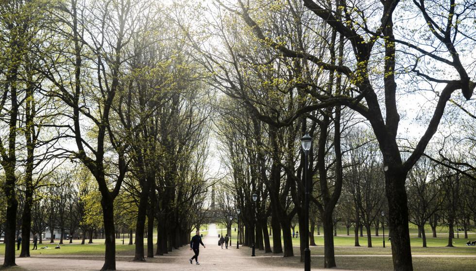 Frognerparken søndag, en dag det ble registrert 51 nye smittetilfeller i Oslo. Foto: Berit Roald / NTB