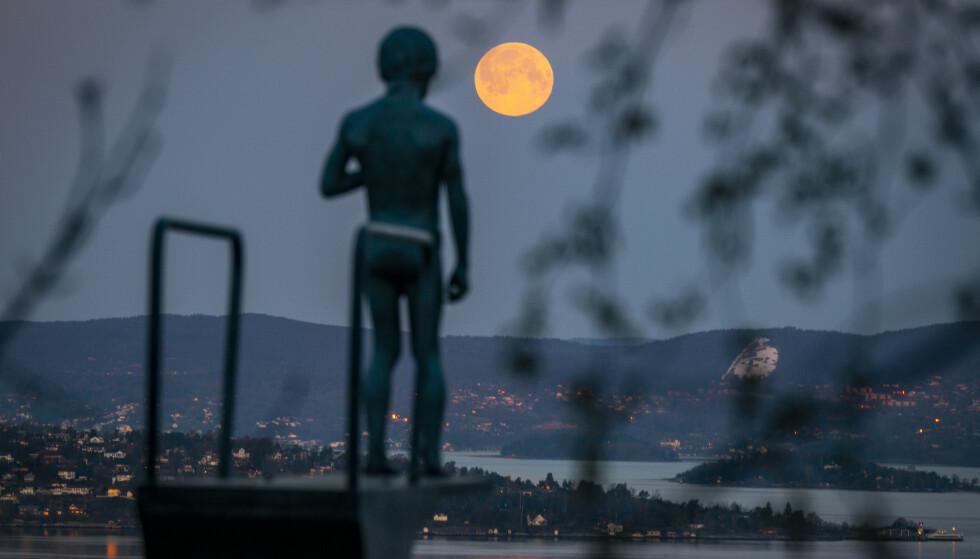 En supermåne på vei ned bak Asker og Nesodden, med skulpturen «Dilemma» i Ekebergparken i Oslo i forgrunnen, tidlig tirsdag morgen. Foto: Heiko Junge / NTB