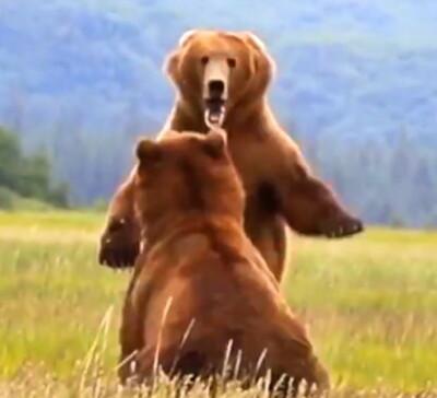 Image: Her får bjørnen nok