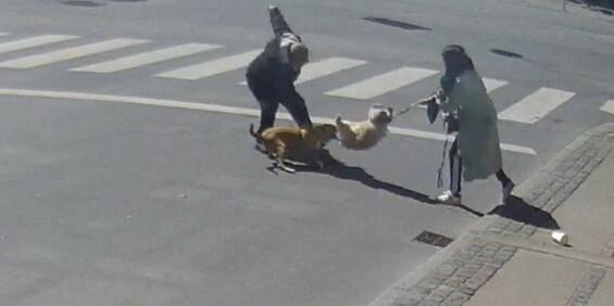 Image: Hund går til angrep