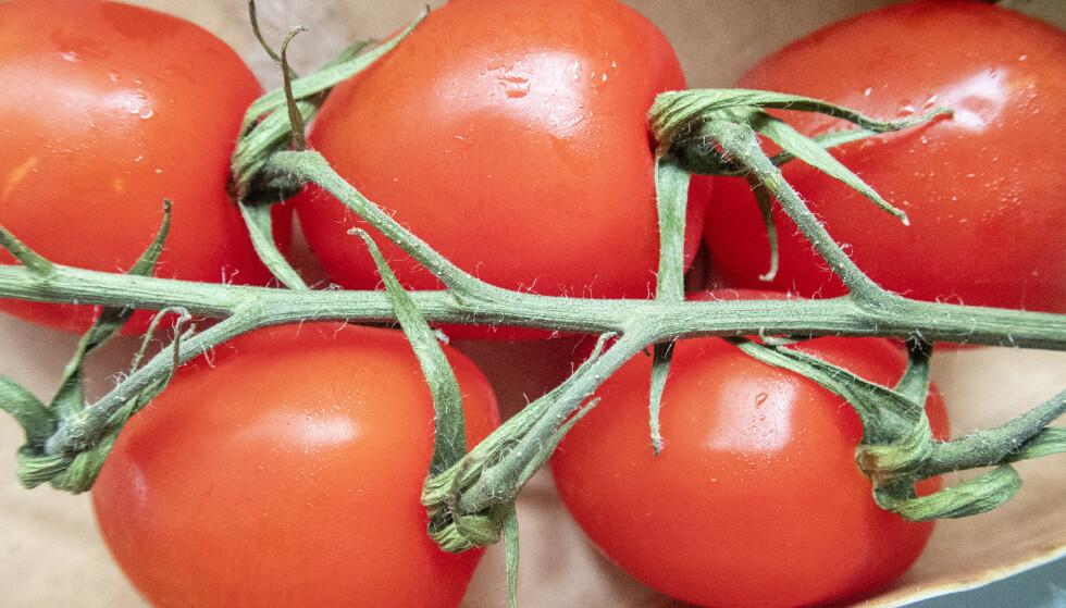 Det smittsomme tomatbrunflekkviruset er påvist i Norge for første gang. Foto: Gorm Kallestad / NTB