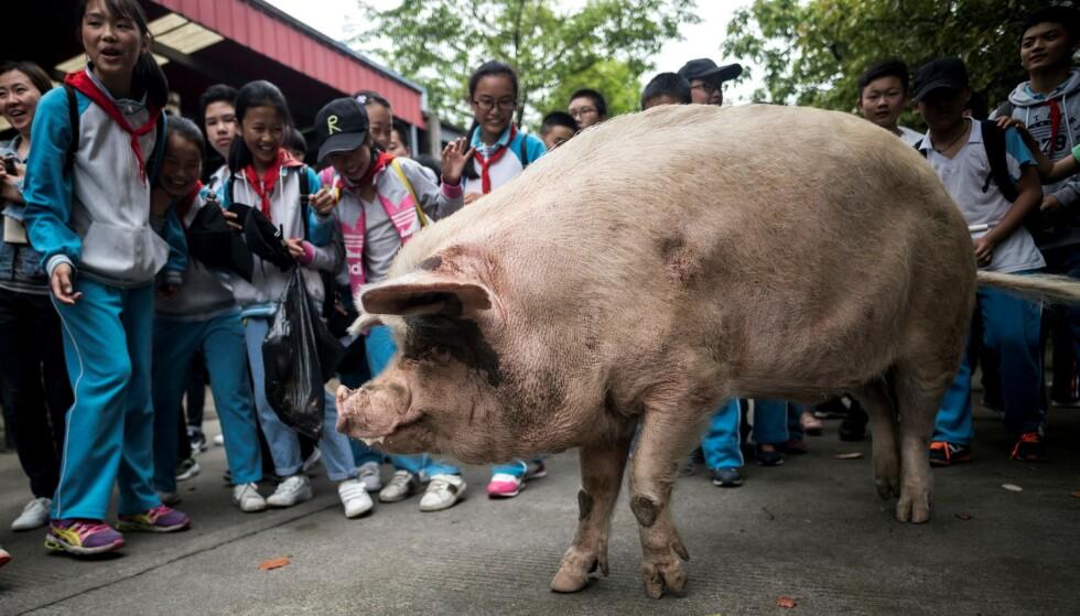 Zhu Jianqiang, som betyr «sterk gris», ble 14 år gammel. Foto: Ben Dooley / AFP/NTB