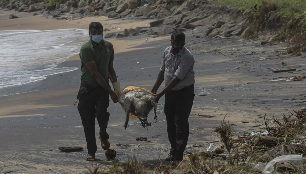 Rundt hundre døde skilpadder har drevet i land med skader på skjellet og i kroppsåpninger etter skipsbrannen utenfor Sri Lanka. Foto: Eranga Jayawardena / AP / NTB