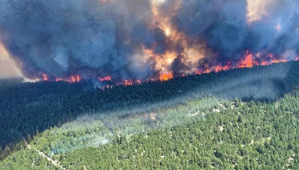 Voldsomme branner herjer etter hetebølgen i Canada. I byen Lytton blir innbyggerne evakuert.(Foto: AFP)