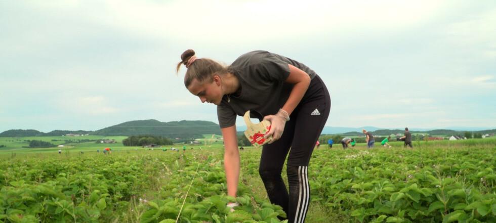 Norsk ungdom redder avlingen