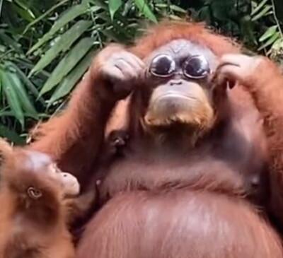 Image: Plutselig gjør apen dette