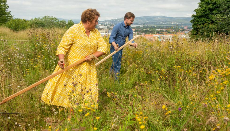 Klima- og miljøminister Sveinung Rotevatn (V) og landbruks- og matminister Olaug Bollestad (KrF) legger fram en tiltaksplan for å beskytte pollinerende ville insekter på Ola Narr i Oslo onsdag. Her slår de gress.Foto: Annika Byrde / NTB.