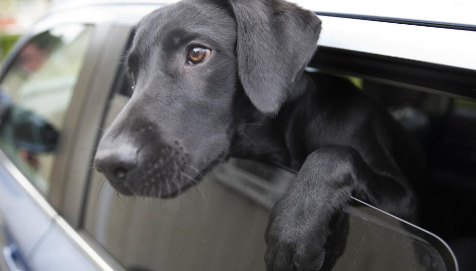 Regjeringen foreslår endringer i hundeloven. Foto: Jon Eeg / NTB