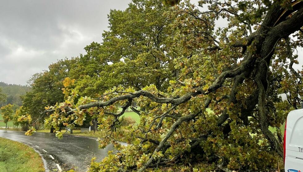 Fylkesvei 1064 ved Carlberg gård i Moss var stengt søndag etter at et tre falt over veien. Foto: Vegtrafikksentralen øst / NTB