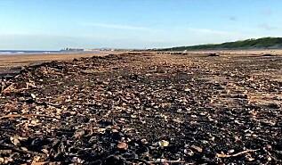 Image: Fant tusenvis av døde dyr på stranda