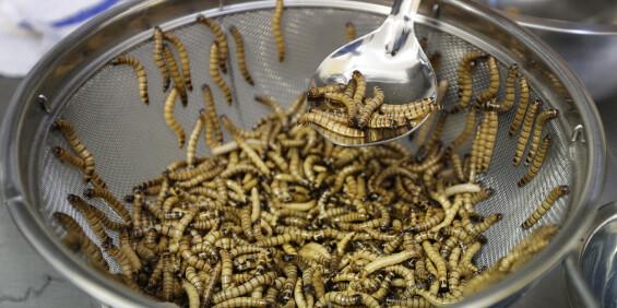 Image: Melormer et stort skritt nærmere godkjenning som mat i EU