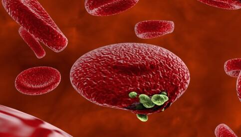 Image: Forskere: Resistente mutasjoner av malaria får fotfeste