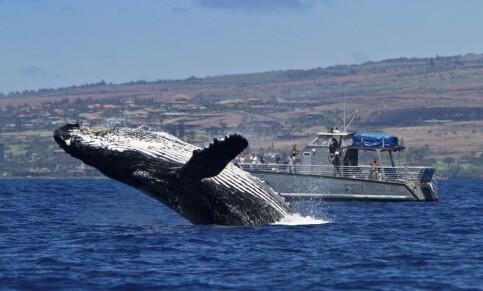 Image: Amerikansk fisker sier han ble slukt av en hval