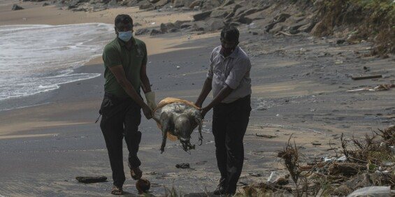 Image: Døde dyr skyller i land etter skipsbrann