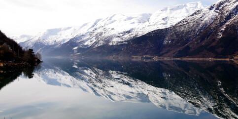 Image: Mattilsynet advarer mot å spise fisk fra Hardangerfjorden og Sognefjorden